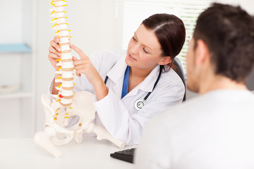 chiropractor showing spinal column to patient