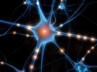 Neurotransmitters are the chemical messengers within the body