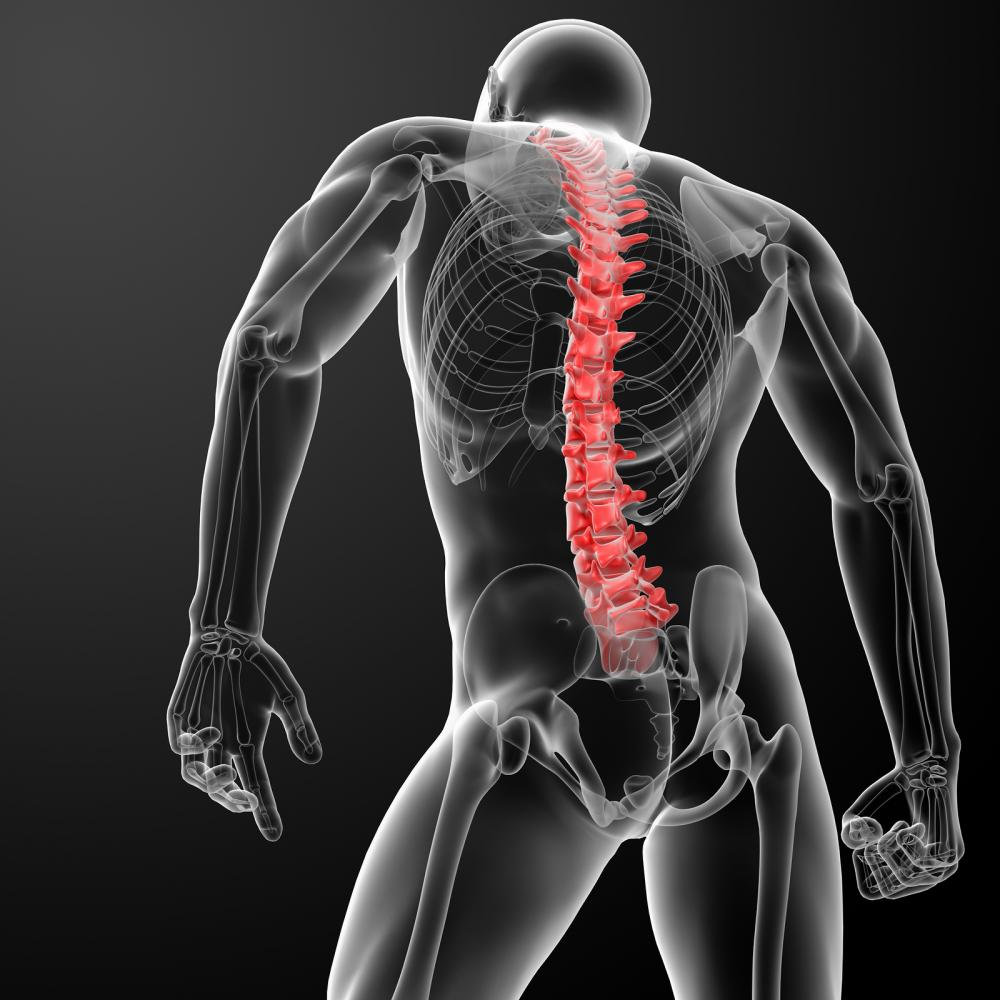 Chiropractors, Chiropractic, Scoliosis, Massage Therapy, Pain, Cold Laser Therapy